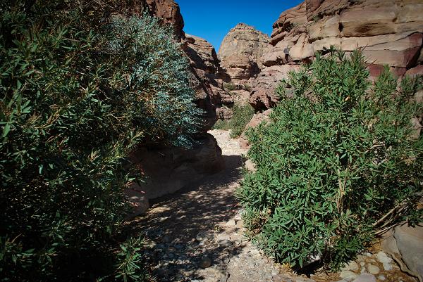 Petra, camminando nel wadi